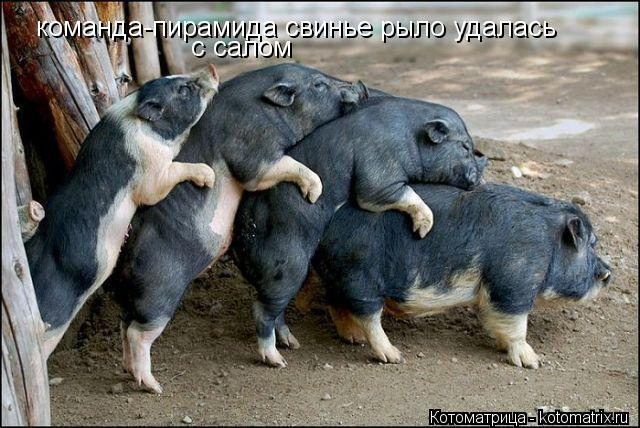Котоматрица: команда-пирамида свинье рыло удалась с салом