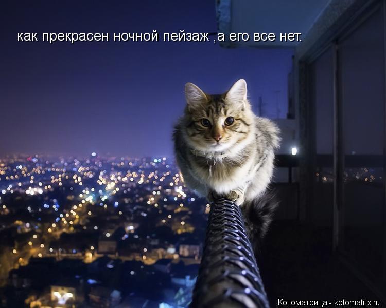 Котоматрица: как прекрасен ночной пейзаж ,а его все нет.