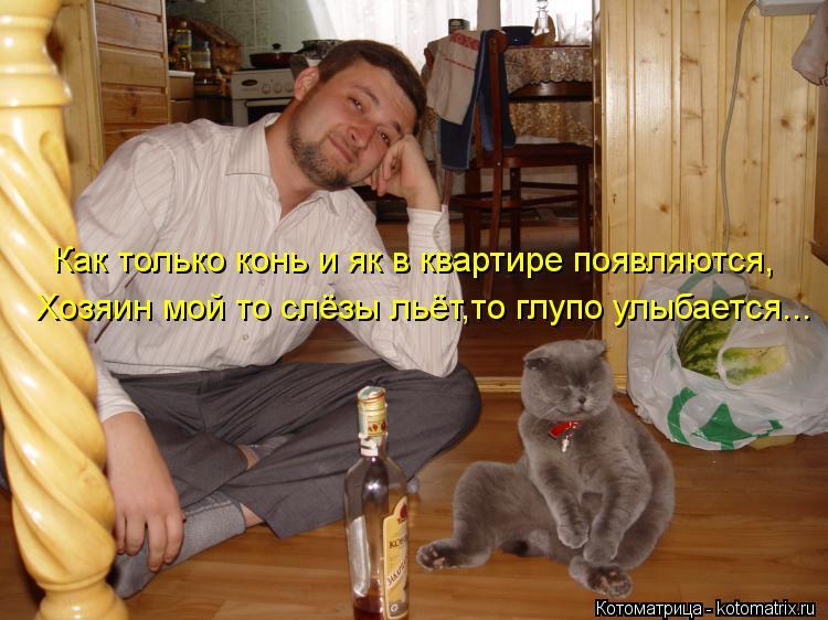 Котоматрица: Как только конь и як в квартире появляются, Хозяин мой то слёзы льёт,то глупо улыбается...