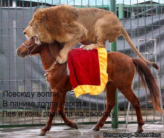 Котоматрица: Повсюду вопли, В панике толпа народа. Лев и конь рванули на свободу.