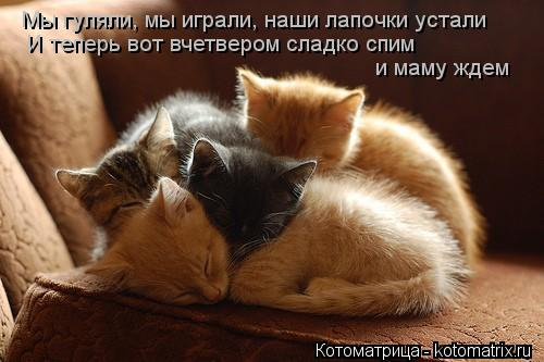 Котоматрица: Мы гуляли, мы играли, наши лапочки устали И теперь вот вчетвером сладко спим  и маму ждем
