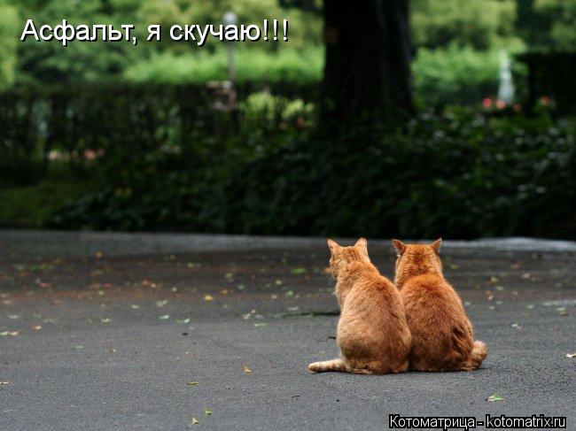 Котоматрица: Асфальт, я скучаю!!!