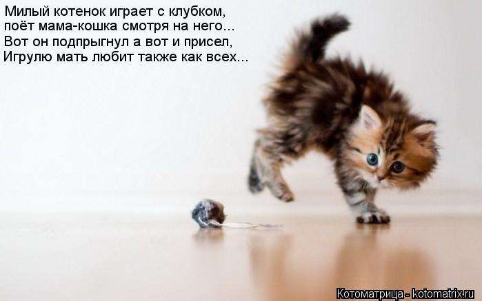 Котоматрица: Милый котенок играет с клубком, поёт мама-кошка смотря на него... Вот он подпрыгнул а вот и присел, Игрулю мать любит также как всех...