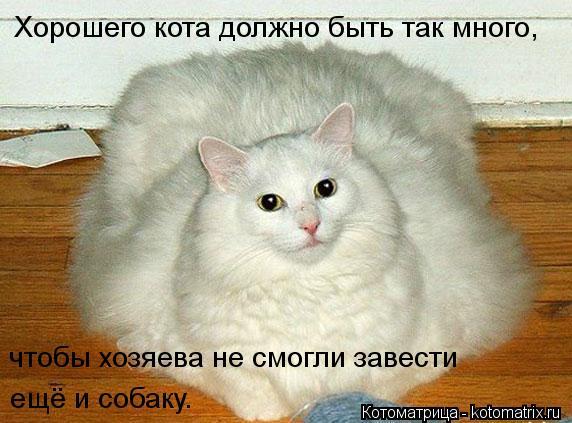 Котоматрица: Хорошего кота должно быть так много, чтобы хозяева не смогли завести  ещё и собаку.