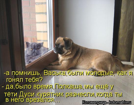 Котоматрица: -а помнишь, Васька,были молодые, как я  гонял тебя? - да,было время,Полкаша,мы ещё у тёти Дуси курятник разнесли,когда ты в него врезался...