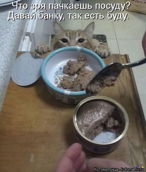 Котоматрица: Что зря пачкаешь посуду? Давай банку, так есть буду.
