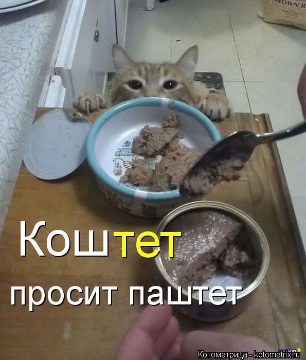 Котоматрица: Кош тет просит паштет