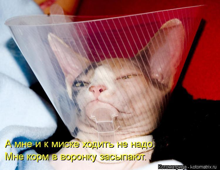 Котоматрица: А мне и к миске ходить не надо. Мне корм в воронку засыпают.
