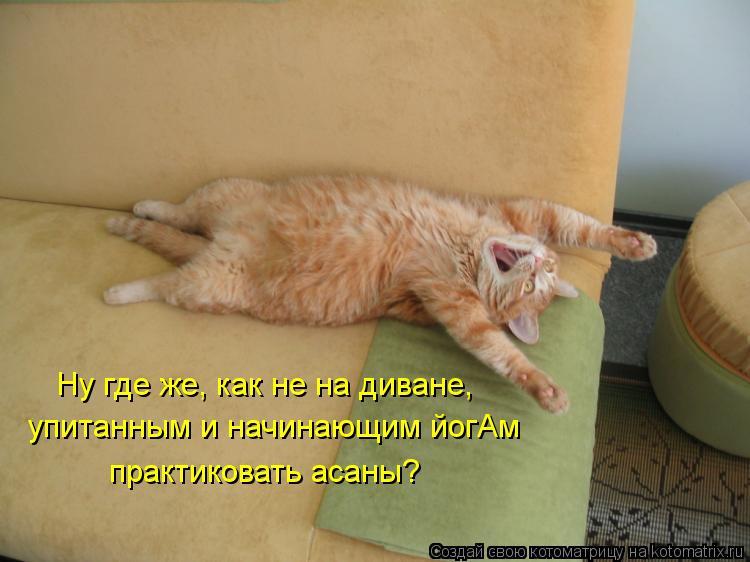 Котоматрица: Ну где же, как не на диване, упитанным и начинающим йогАм практиковать асаны?