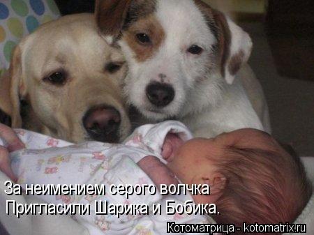 Котоматрица: За неимением серого волчка Пригласили Шарика и Бобика.