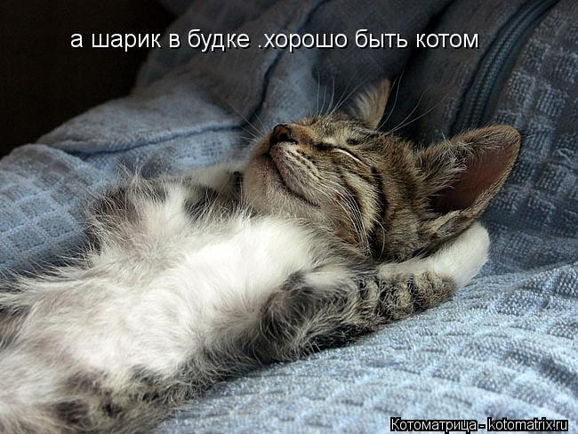 Котоматрица: а шарик в будке .хорошо быть котом