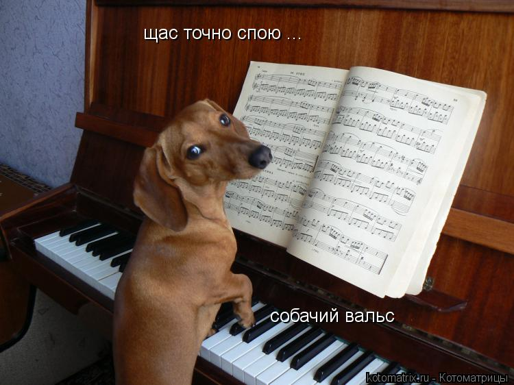 Котоматрица: щас точно спою ... собачий вальс