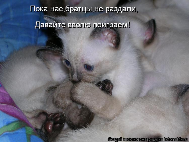 Котоматрица: Пока нас,братцы,не раздали, Давайте вволю поиграем!