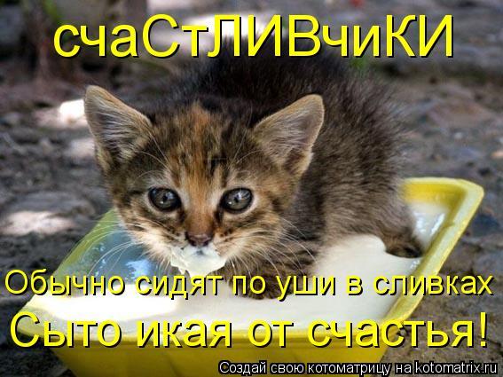 Котоматрица: счаСтЛИВчиКИ Обычно сидят по уши в сливках Сыто икая от счастья!