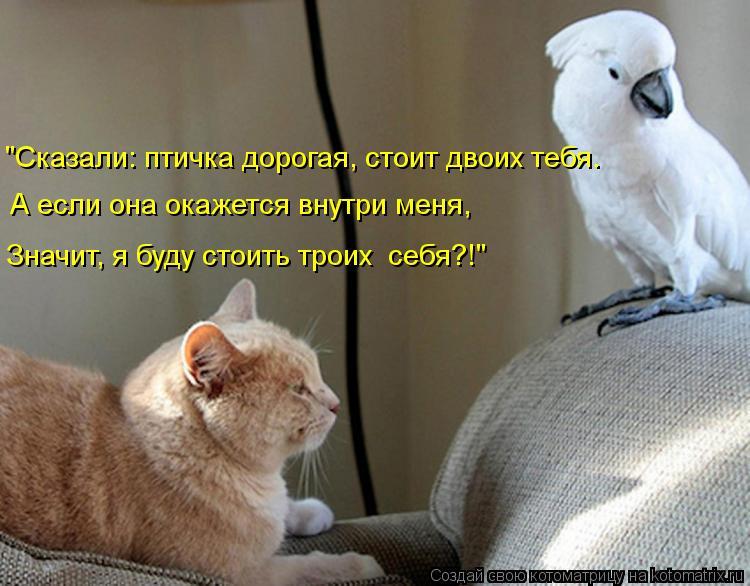 """Котоматрица: """"Сказали: птичка дорогая, стоит двоих тебя. А если она окажется внутри меня, Значит, я буду стоить троих  себя?!"""""""