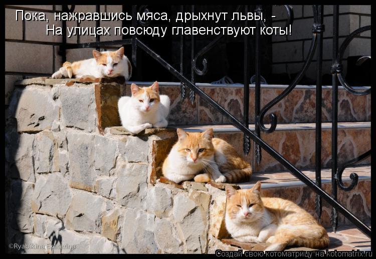 Котоматрица: Пока, нажравшись мяса, дрыхнут львы, - На улицах повсюду главенствуют коты!