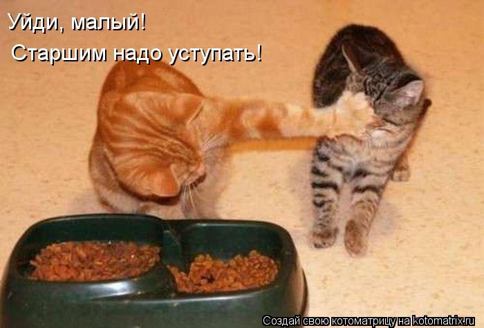 Котоматрица: Уйди, малый! Старшим надо уступать!