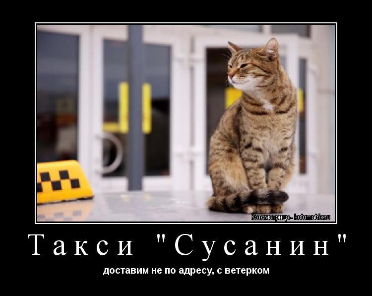 "Котоматрица: Такси ""Сусанин"" доставим не по адресу, с ветерком"