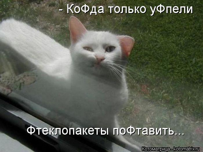 Котоматрица: - КоФда только уФпели  Фтеклопакеты поФтавить...