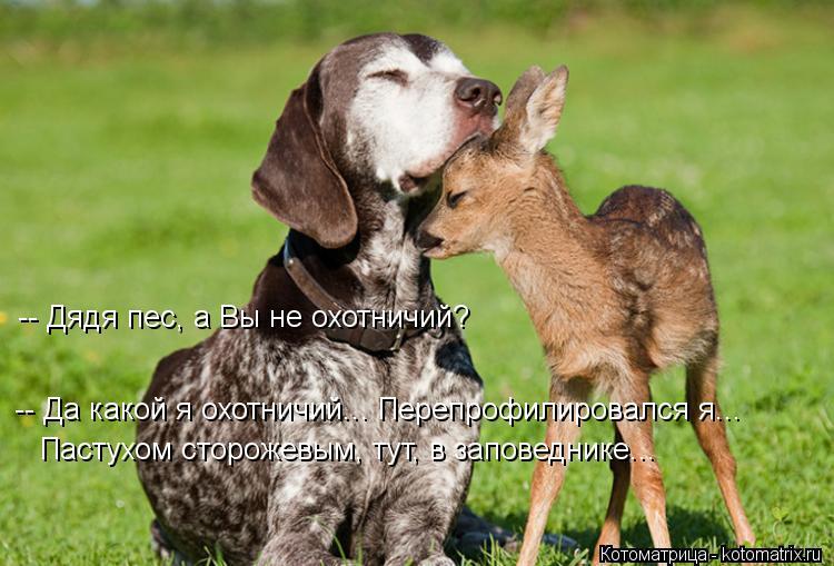 Котоматрица: -- Дядя пес, а Вы не охотничий? -- Да какой я охотничий... Перепрофилировался я... Пастухом сторожевым, тут, в заповеднике...