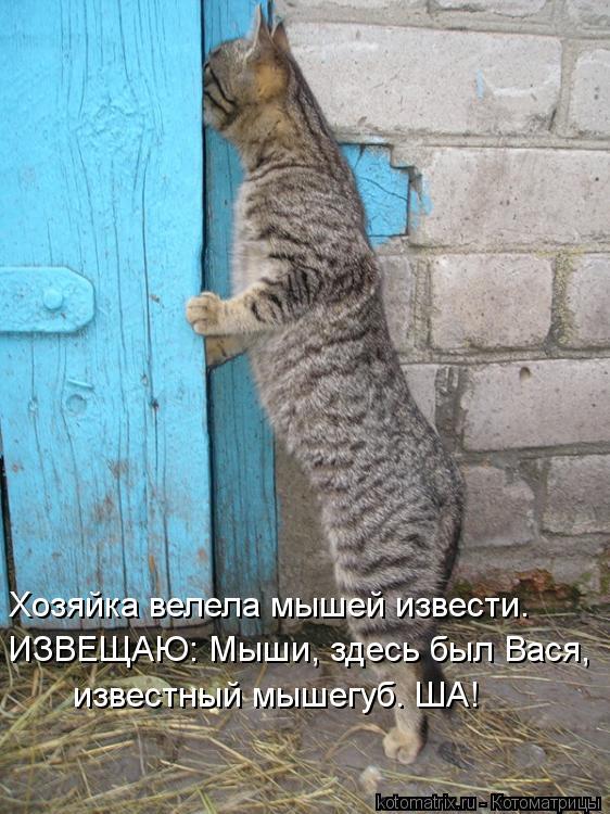Котоматрица: известный мышегуб. ША! ИЗВЕЩАЮ: Мыши, здесь был Вася, Хозяйка велела мышей извести.