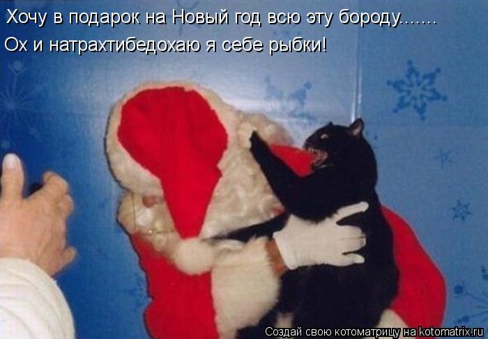 Котоматрица: Хочу в подарок на Новый год всю эту бороду....... Ох и натрахтибедохаю я себе рыбки!