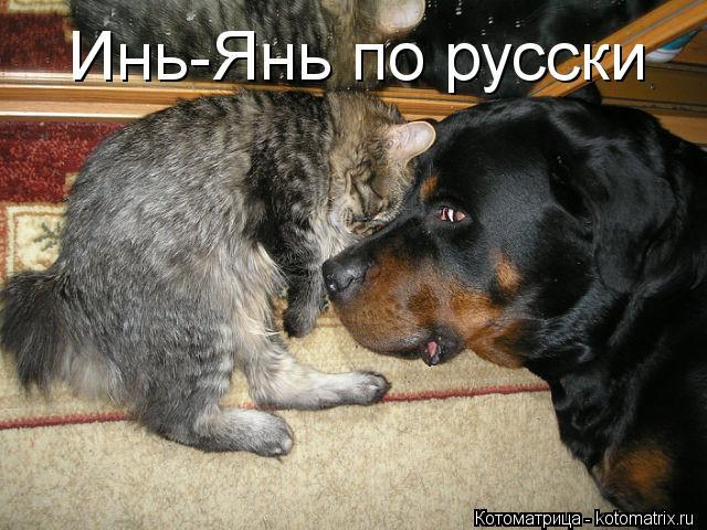 Котоматрица: Инь-Янь по русски