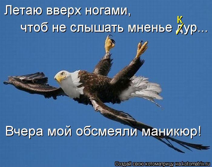 Котоматрица: Летаю вверх ногами,  чтоб не слышать мненье дур...  Вчера мой обсмеяли маникюр! __ к