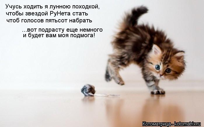 Котоматрица: Учусь ходить я лунною походкой, чтобы звездой РуНета стать чтоб голосов пятьсот набрать и будет вам моя подмога! ...вот подрасту еще немного
