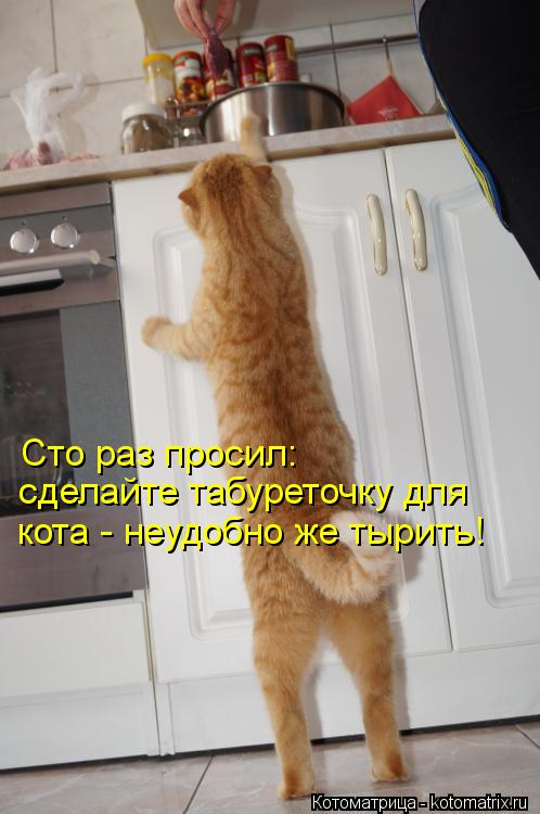 Котоматрица: Сто раз просил: сделайте табуреточку для  кота - неудобно же тырить!