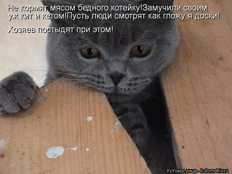 Котоматрица: Не кормят мясом бедного котейку!Замучили своим уж кит и кетом!Пусть люди смотрят как гложу я доски! Хозяев постыдят при этом!