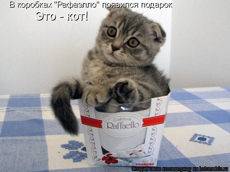 """Котоматрица: В коробках """"Рафаэлло"""" появился подарок Это - кот!"""