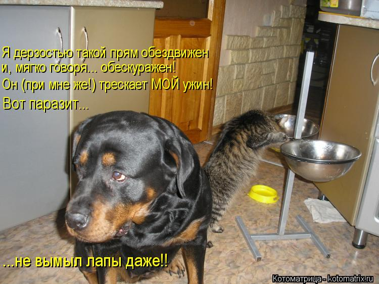 Котоматрица: Я дерзостью такой прям обездвижен и, мягко говоря... обескуражен! Он (при мне же!) трескает МОЙ ужин! Вот паразит... ...не вымыл лапы даже!!