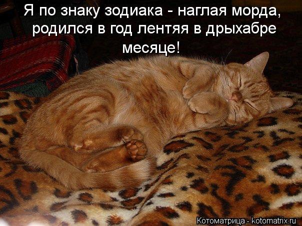 Котоматрица: Я по знаку зодиака - наглая морда, родился в год лентяя в дрыхабре месяце!