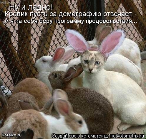 Котоматрица: Ну и ладно! Кролик пусть за демографию отвечает,  А я на себя беру программу продовольствия...