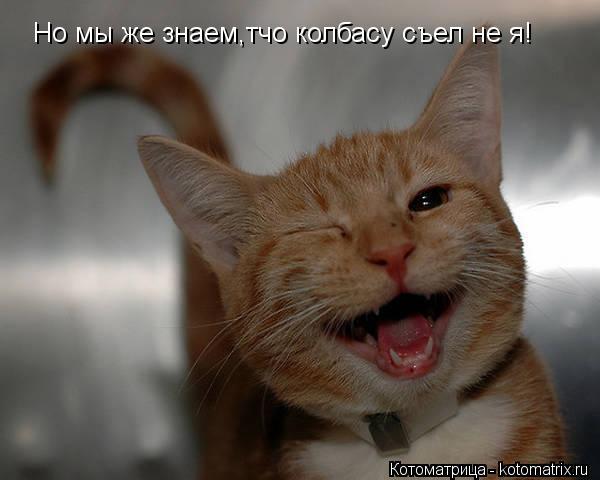 Котоматрица: Но мы же знаем,тчо колбасу съел не я!