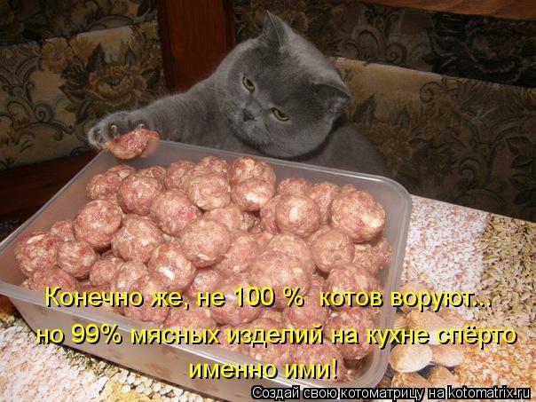 Котоматрица: Конечно же, не 100 %  котов воруют... но 99% мясных изделий на кухне спёрто  именно ими!