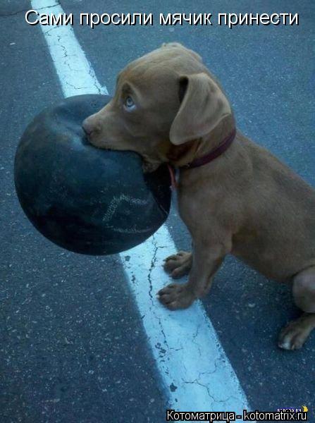 Котоматрица: Сами просили мячик принести