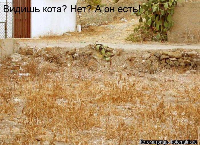 Котоматрица: Видишь кота? Нет? А он есть!