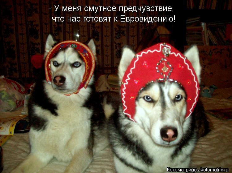 Котоматрица: - У меня смутное предчувствие,  что нас готовят к Евровидению!