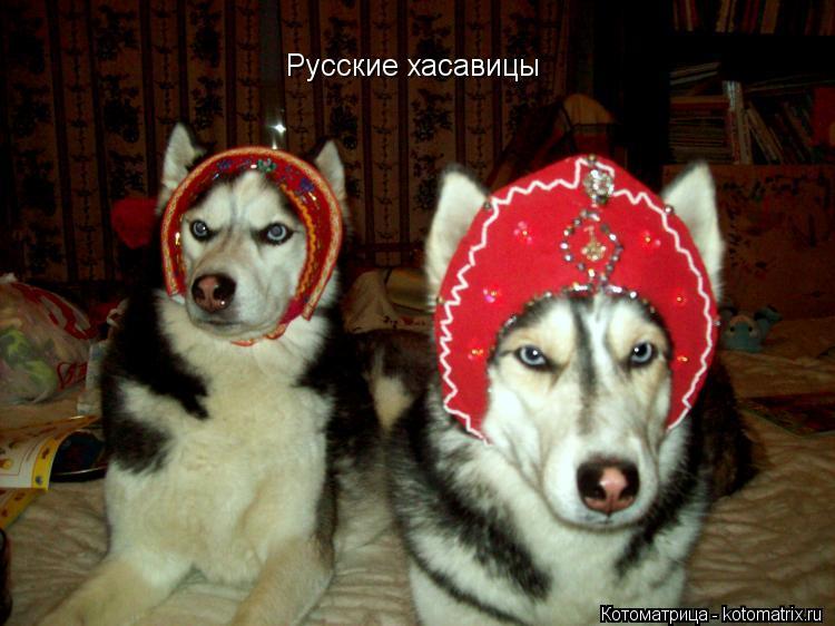 Котоматрица: Русские хасавицы