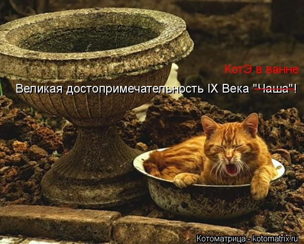 """Котоматрица: Великая достопримечательность IХ Века """"Чаша""""! ______ КотЭ в ванне"""