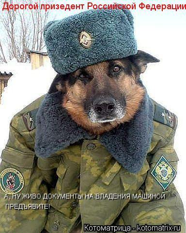 Котоматрица: Дорогой призедент Российской Федерации! А, НУ ЖИВО ДОКУМЕНТЫ НА ВЛАДЕНИЯ МАШИНОЙ  ПРЕДЪЯВИТЕ!