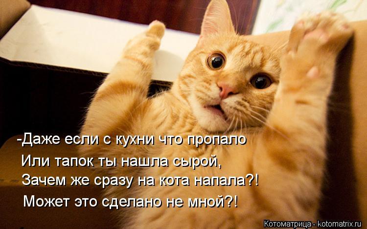 kotomatritsa_Yx.jpg