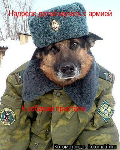 Котоматрица: Надоело детей мучать с армией К собакам пристали