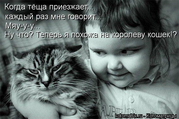 Котоматрица: Когда тёща приезжает... Когда тёща приезжает... каждый раз мне говорит... Мяу-у-у... Ну что? Теперь я похожа на королеву кошек!?