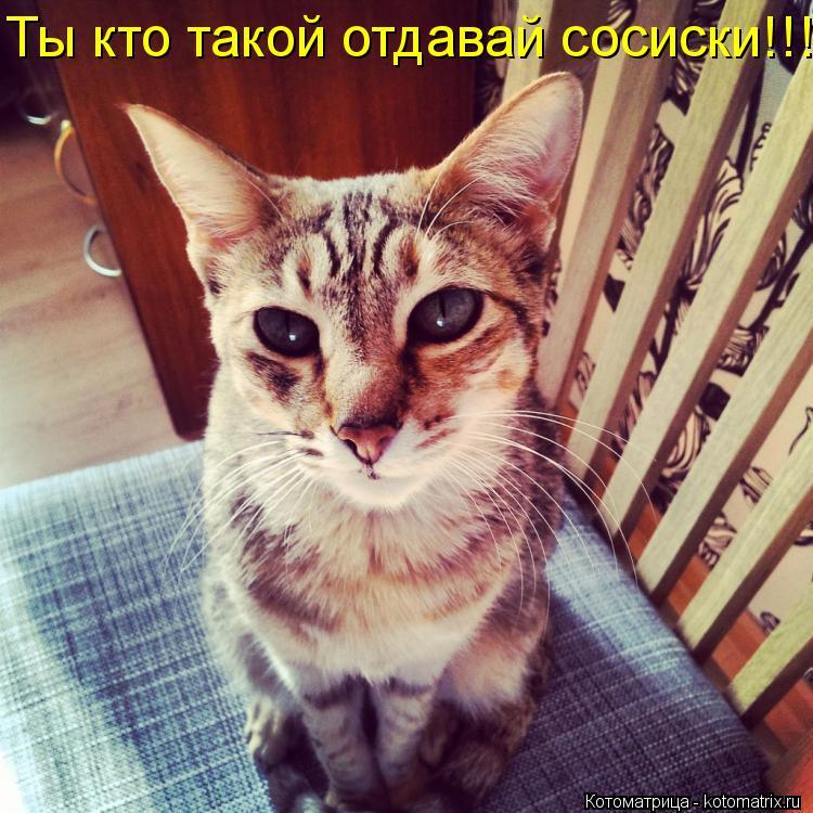 Котоматрица: Ты кто такой отдавай сосиски!!!