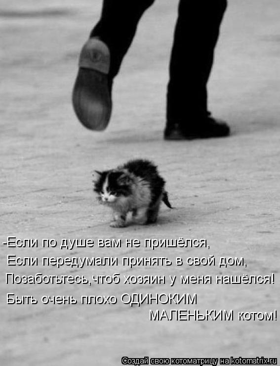 Котоматрица: Позаботьтесь,чтоб хозяин у меня нашёлся! Быть очень плохо ОДИНОКИМ МАЛЕНЬКИМ котом! -Если по душе вам не пришёлся, Если передумали принять в