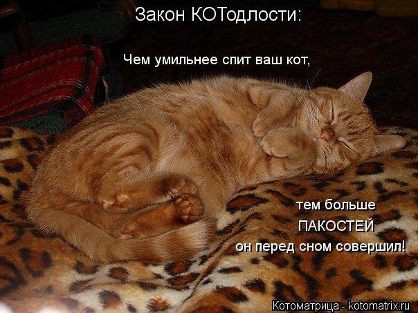 Котоматрица: Закон КОТодлости: Чем умильнее спит ваш кот, тем больше ПАКОСТЕЙ он перед сном совершил!