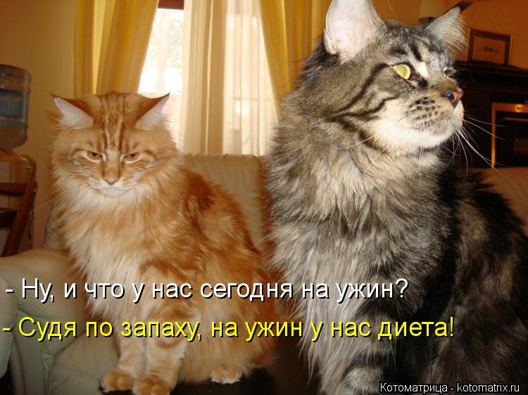 http://kotomatrix.ru/images/lolz/2013/04/12/kotomatritsa_3x1.jpg
